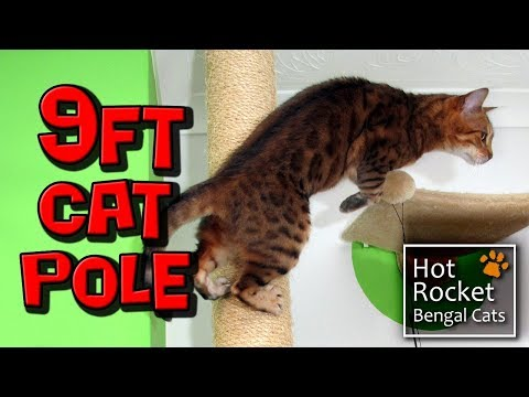 9ft tall cat scratch pole – Bengal cats love to climb & play