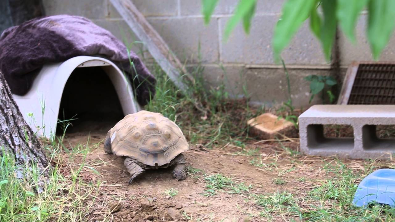 How To Build A Tortoise House
