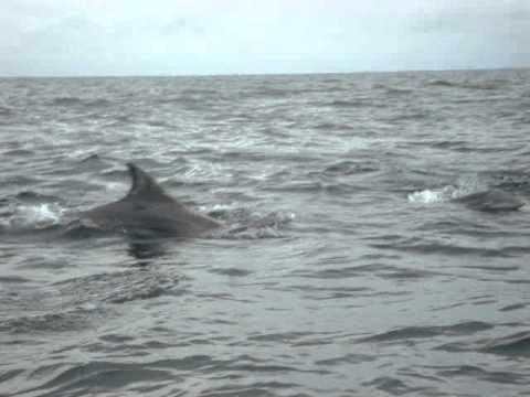 Delfines mulares costa esmeralda veracruz 2012 youtube for Casitas veracruz