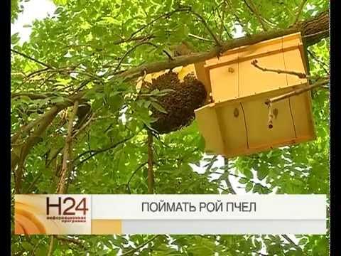 где и как ловить пчел