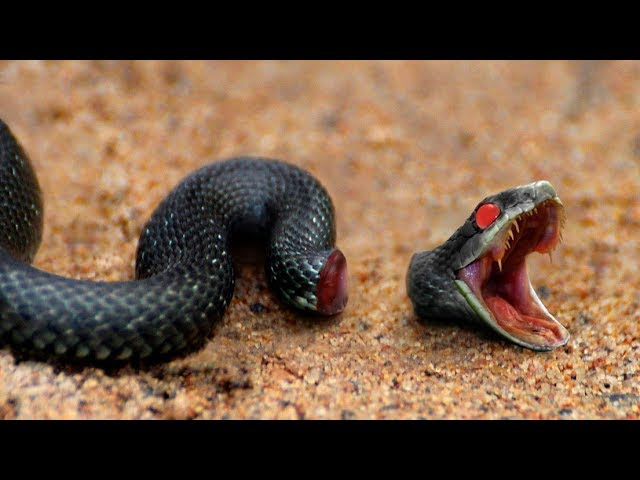 8 Animals That Can Live After Death