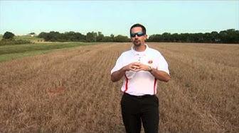 Urea Fertilizer