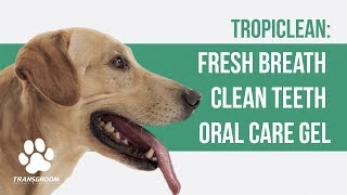 Tropiclean: Fresh Breath Clean Teeth Oral Care Gel | TRANSGROOM