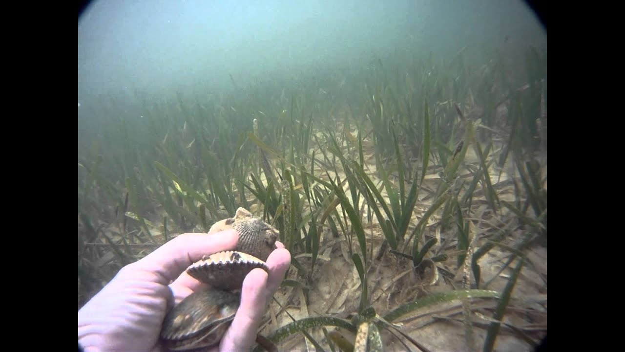 Scalloping in Port St. Joe
