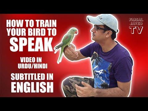 Parrot ko Bolna Sekhana | HOW TO TRAIN YOUR BIRD TO SPEAK | video in URDU/Hindi