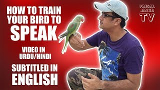 Parrot ko Bolna Sekhana | HOW TO TRAIN YOUR BIRD TO SPEAK | video in URDU/Hindi Subtitled in English