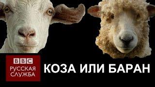 Китайский Новый год: Год козы или барана? - BBC Russian
