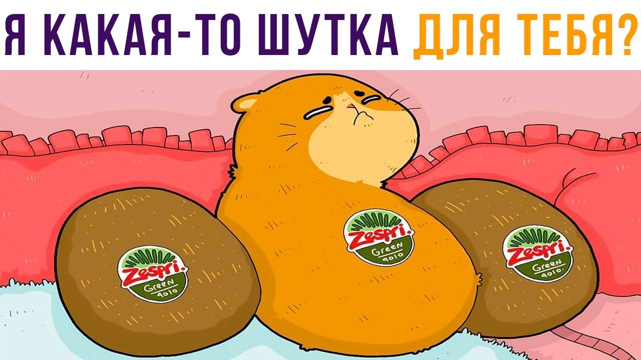 СКОЛЬКО КИВИ НА ПРЕВЬЮ Приколы с котами  Мемозг 699