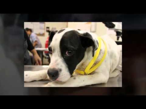 San Antonio Pets Alive! PASS