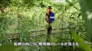 国鉄川俣線廃線跡