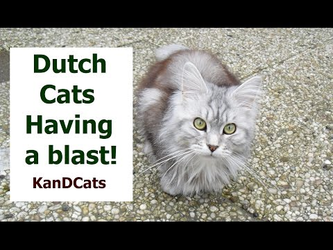 Life of Cats // Weekend Fun // Dutch Cat Vlog // Maine Coon