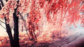 Download Mp3 Love & Loss   Mattia Cupelli - Full Album  2013