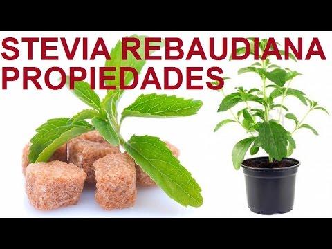 Hoja de stevia para adelgazar