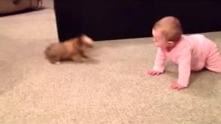 Смешные приколы про собак и детей   младенец разговаривает с собачкой