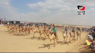 مهرجان «سباق الهجن» الخامس عشر بالإسماعيلية