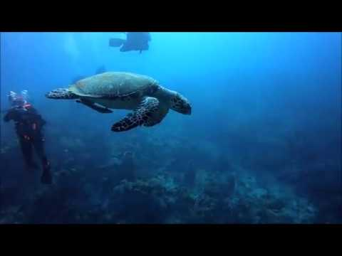 """Into The Descent"" (Scuba Diving Belize Barrier Reef & Travelling The World)"