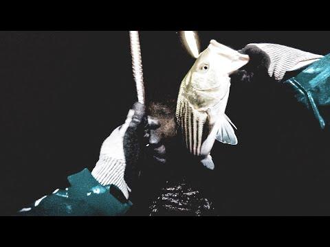 Fall Run Striped Bass Surf Fishing - Pre Storm Night Fishing *broken Waders And Keeper Bass*