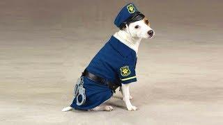 Paw Patrol Mod