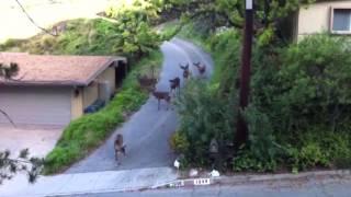 Cat vs Deer - The Translation