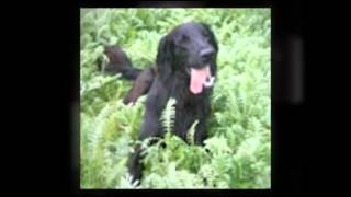 Dog Behaviour Southampton - Aa Dog Training 07714 769260