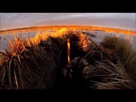Arkansas Rice Field Duck Hunt