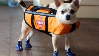 КРУТЫЕ ТОВАРЫ ДЛЯ СОБАК С ALIEXPRESS | 10 Товаров для собак с Алиэкспресс + Конкурс