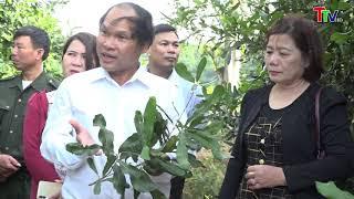 Hội thảo khoa học phát triển cây Mắc ca tại Thanh Hoá