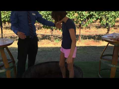 Catherine Stomping Grapes At Grgich Hills In Napa Valley