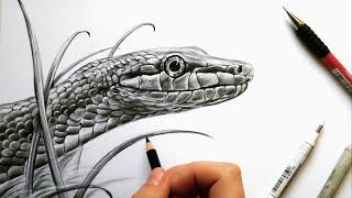 snake drawing realistic reptile graphite drawings pencil sketch leontine vliet van draw reptiles getdrawings animal