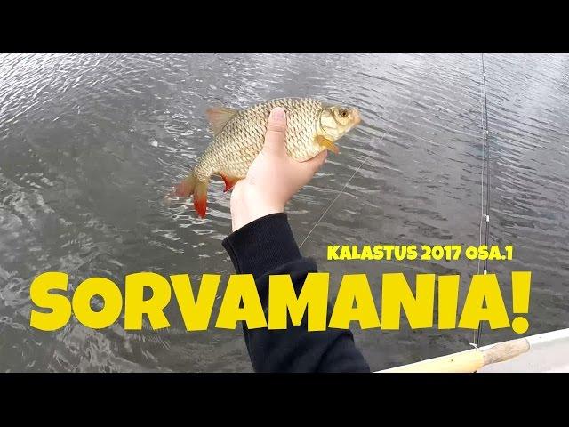 SorvaMania! Sorvan kalastusta lipalla | Kalastus 2017 osa.1