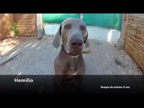 CHIEN PASSÉ PAR EDUCATEUR VIOLENT / RÉÉDUCATION ALL DOG