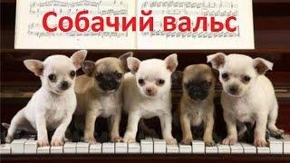 """Разбор песни """"Собачий вальс"""""""