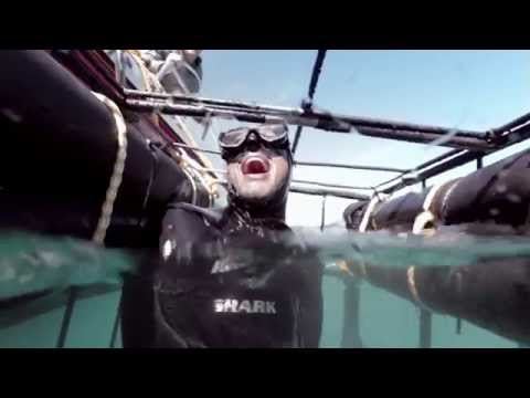 go-shark-cage-diving-in-south-africa