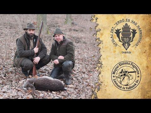 Muzzleloading hunt in Gyulaj using a Pedersoli Missouri River Hawken rifle