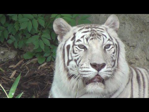 Audubon Zoo Highlights New Exhibits 2016
