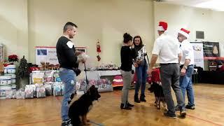 Mikołajkowa Międzynarodowa Wystawa Psów Rasowych CACIB 9 grudnia 20...