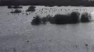 Φλαμίγκο στην Λίμνη Ορόκλινης
