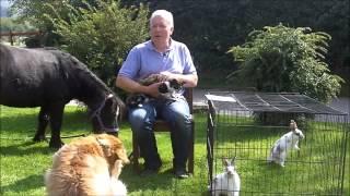 Reiki Animal Healer Home Study Course