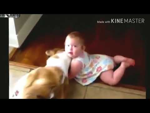 Funny dogs and babies talking - cute dog & baby compilation