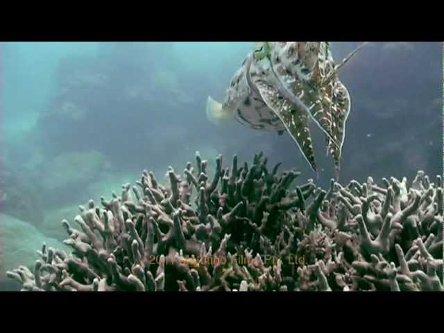 La Gran Barrera De Coral - Español