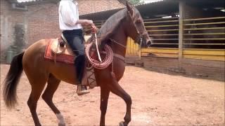 caballo el gitano en venta.