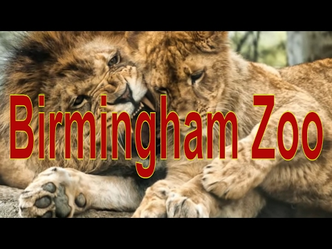 Animals in Birmingham Zoo in Birmingham, Alabama, United States