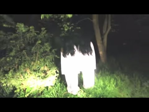 Top 5 Ghost Pranks - Samara Morgan Pranks - Crazy Horror Pranks