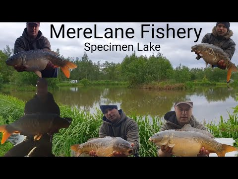 Mere Lane Fishery! Specimen Lake Adventure! Carp Fishing ,2nd Trip
