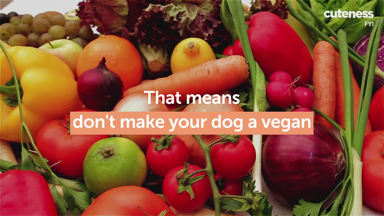 Chew This Not That A Guide To The Healthiest Dog Food Youtube