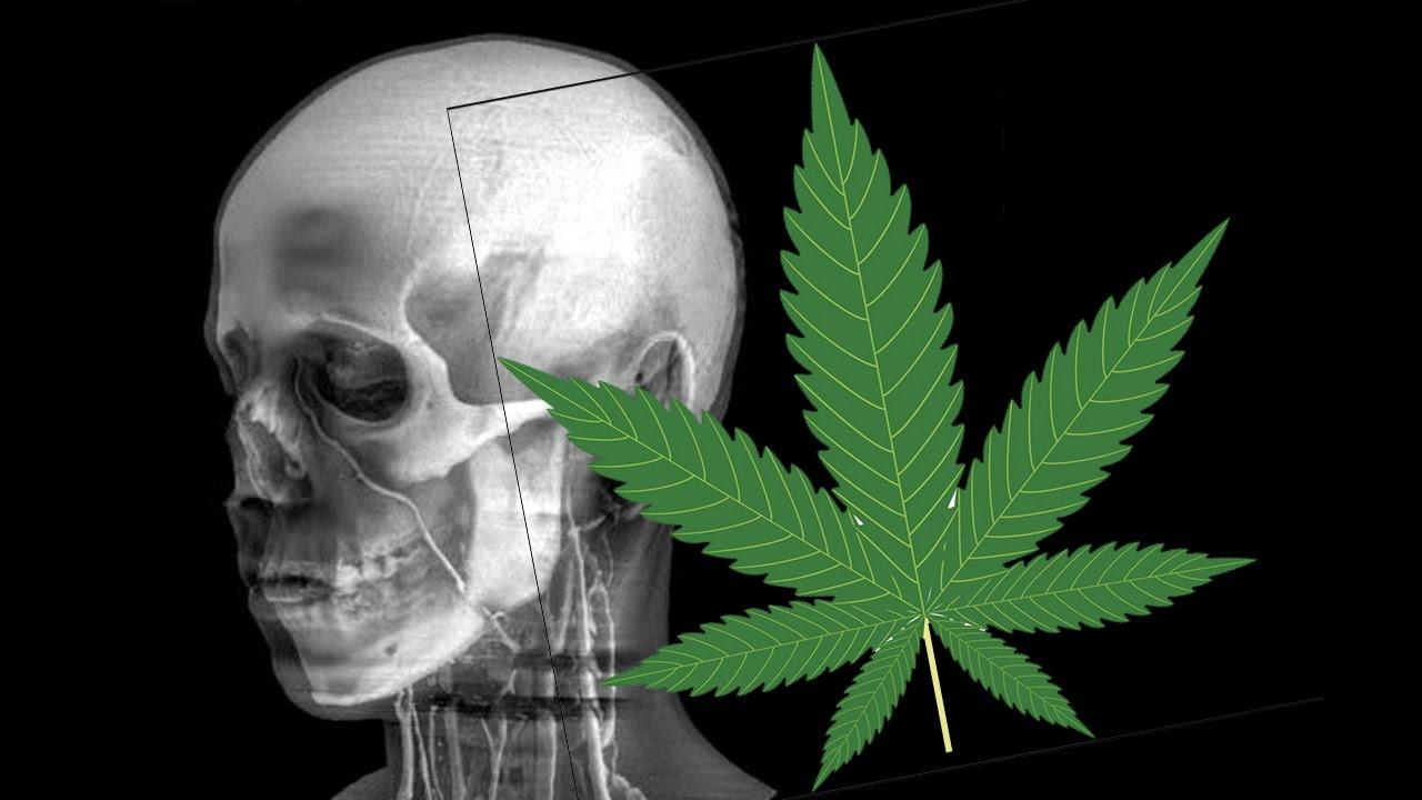 Видео эффект марихуаны купить семена марихуаны наложенным платежом в россии