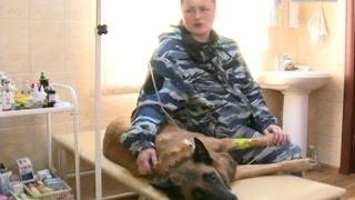 Вести-Хабаровск. Отравление собаки кинолога