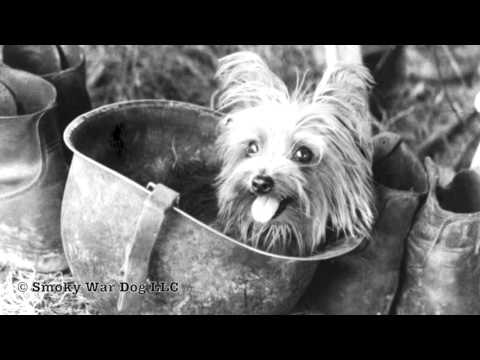 Smoky The War Dog WWII Hero | Australia RSPCA Purple Cross Award | William A. Wynne Thank You