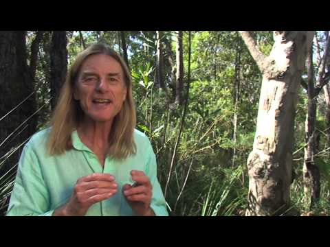 Australian Bush Flower Essences Channel Australian Bush Flower
