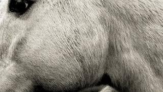Bonny Light Horseman - Jane Jane (official audio)